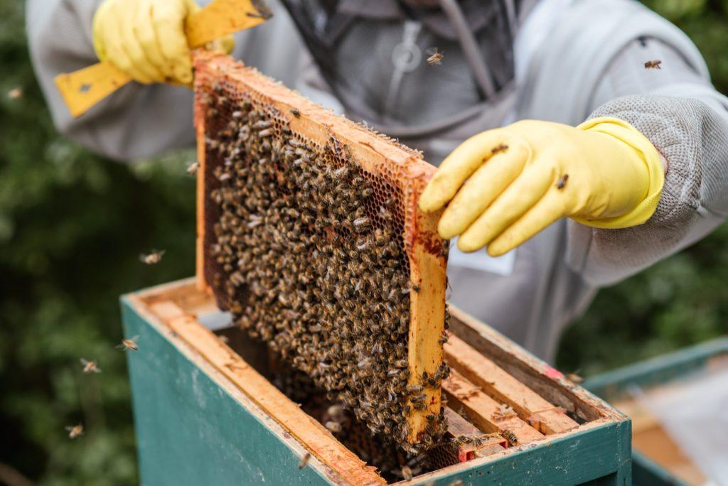 Comment fabriquer une ruchette soi-même ?