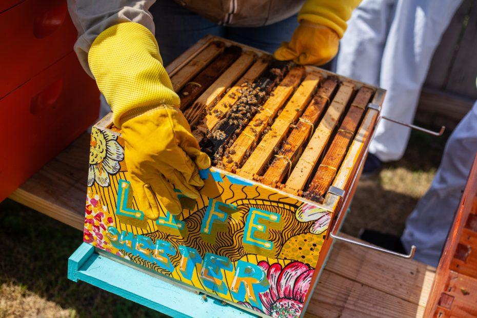 fabriquer ruche